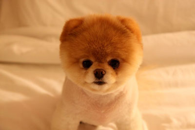 boo-teddy-bear