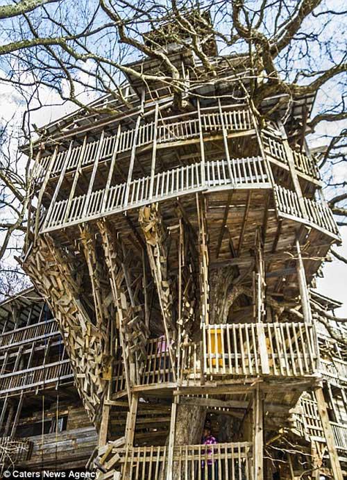 Rumah Atas Pokok Paling Tinggi Di Dunia