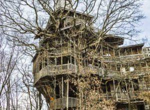 Rumah Pokok Tertinggi Di Dunia