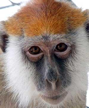bunga berbentuk muka monyet aku seorang blogger wanita